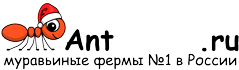 Муравьиные фермы AntFarms.ru - Тольятти